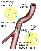 steroid hormones regulate gene expression by